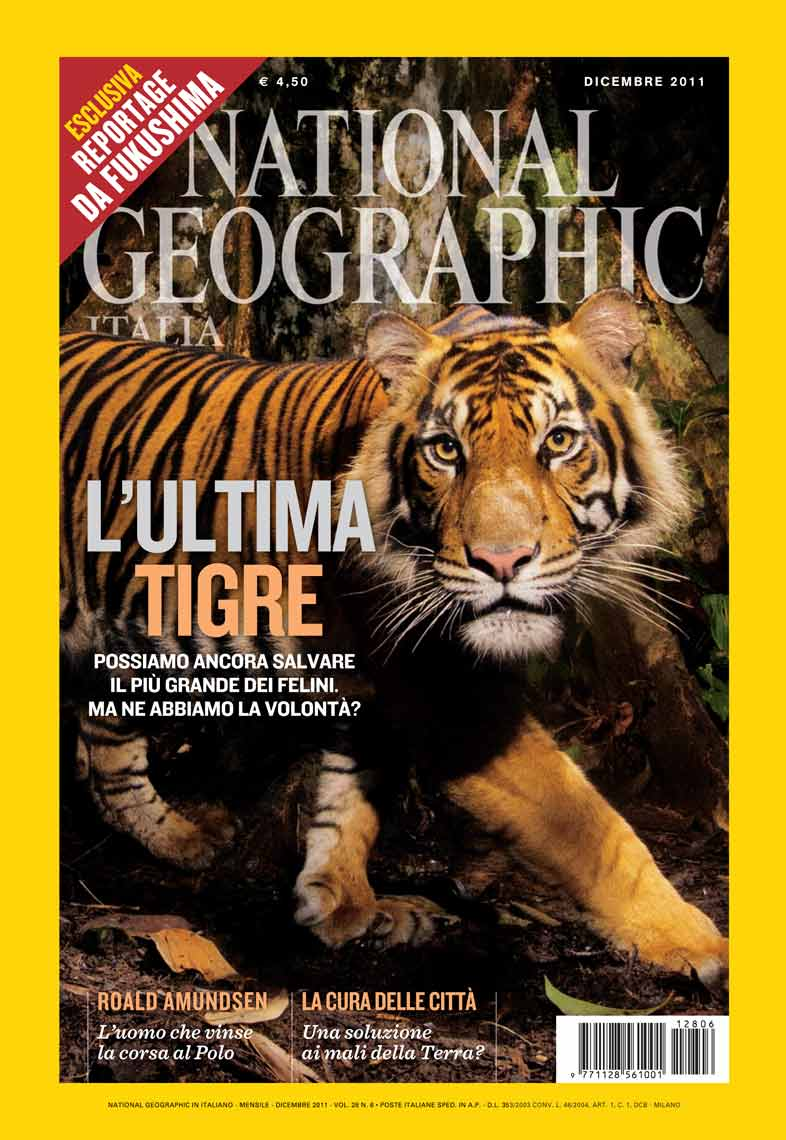 NGM_TigersItalyCover_WEB