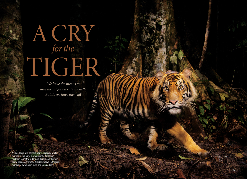 A Cry for the Tiger.